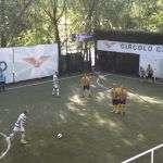 Terzagiornata della Coppa dei Canottieri 2016 al Circolo Canottieri Lazio